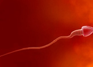 espermatozoide, ovulo, inseminacion, mama, embarazo